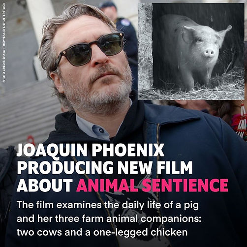 6 Joaquin Phoenix - Animal Sentience.jpg