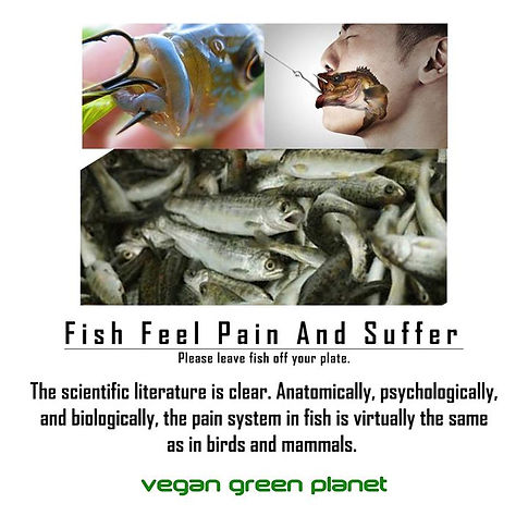 Fish Feel Pain and Suffer