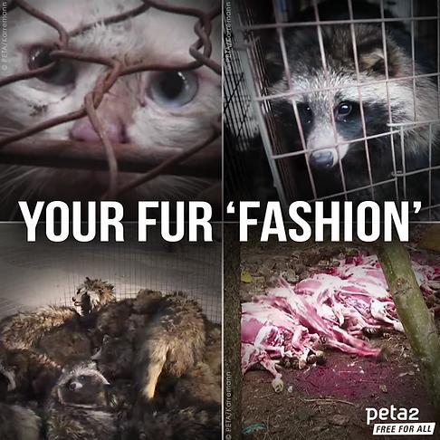 Fur Coat Cruelty