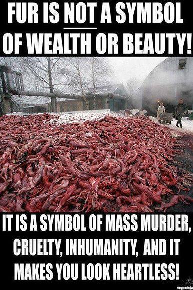 Fur Coat Animal Cruelty