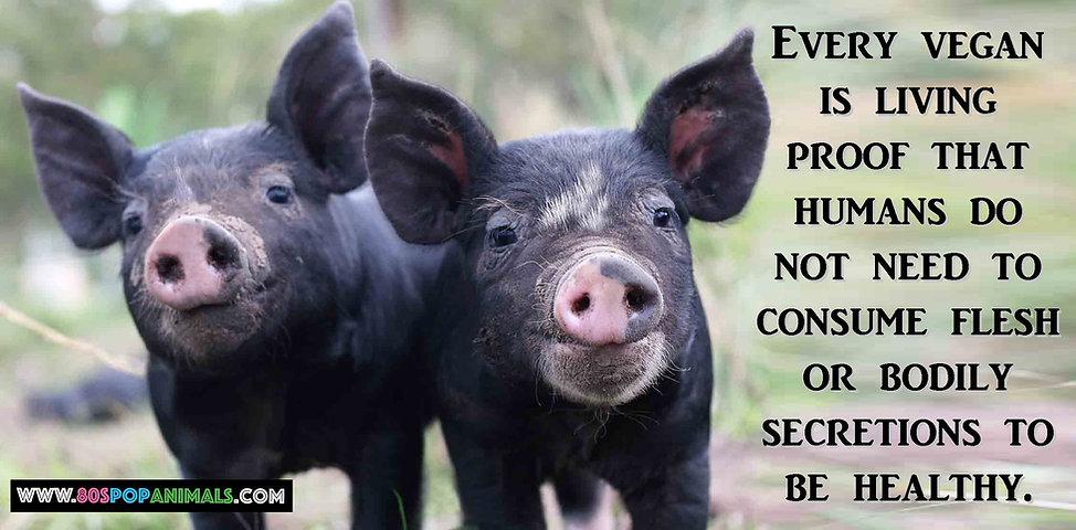 Vegans Veganism