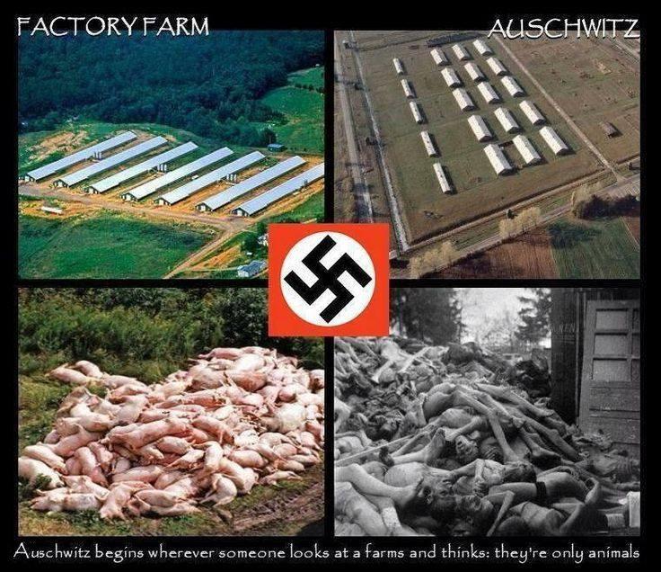 Animal Holocaust