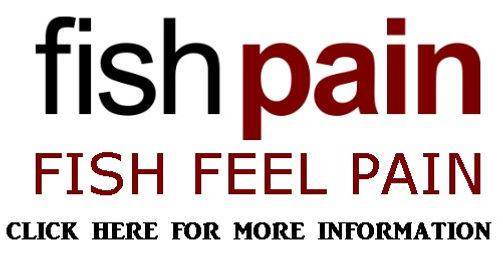 Fish Pain.jpg