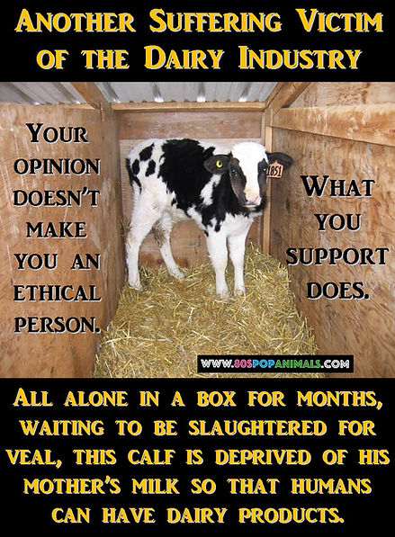 3Another Suffering Victim Of the Dairy I