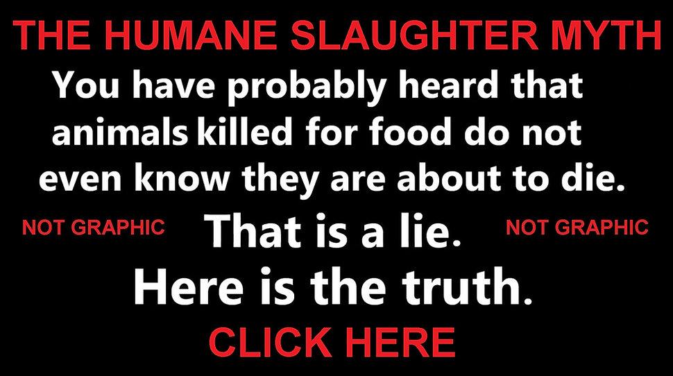 Humane Slaughter Myth