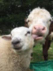 6 Cow and Lamb.jpg