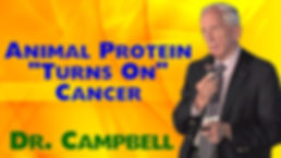 Animal protein causes cancer