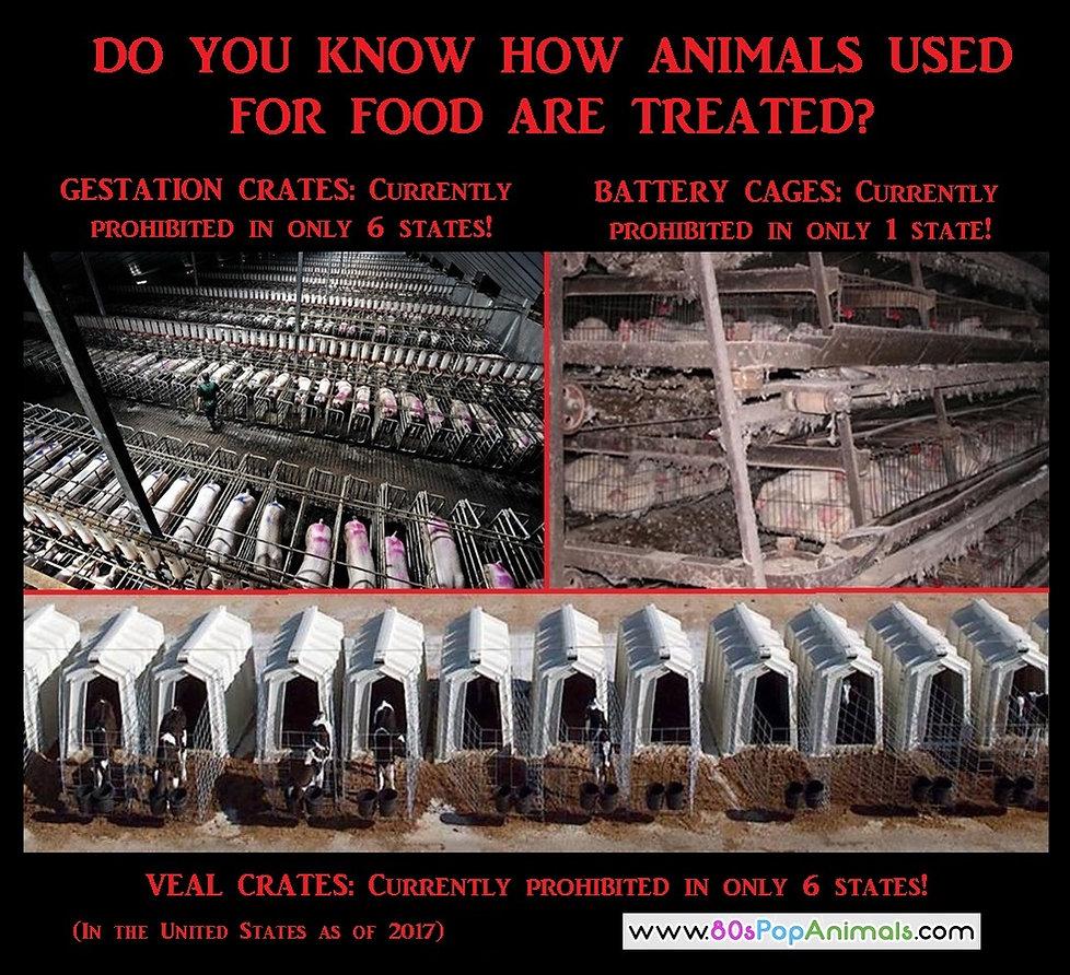 Food Animals Treatment
