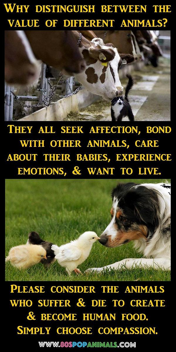 Food Animals