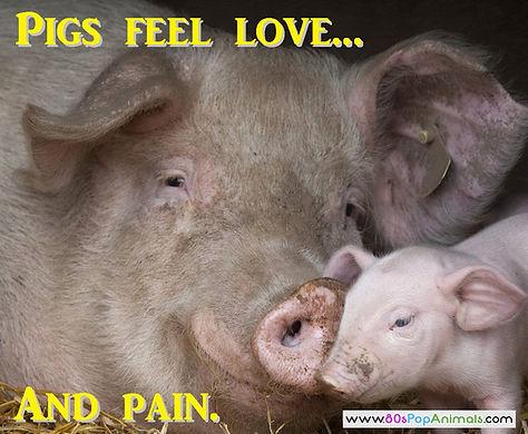 Pigs Love