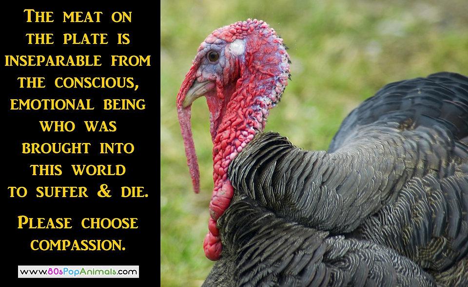 Vegan Compassion