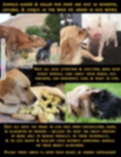 Animals We Eat