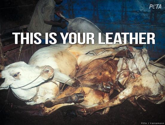 Leather Animal Cruelty