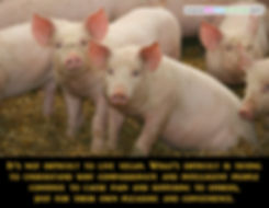 Vegan Difficult Veganism