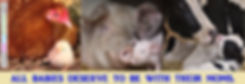 Farm Animal Mothers & Babies