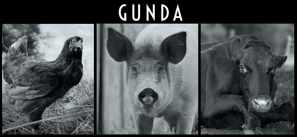 GUNDA vegan documentary