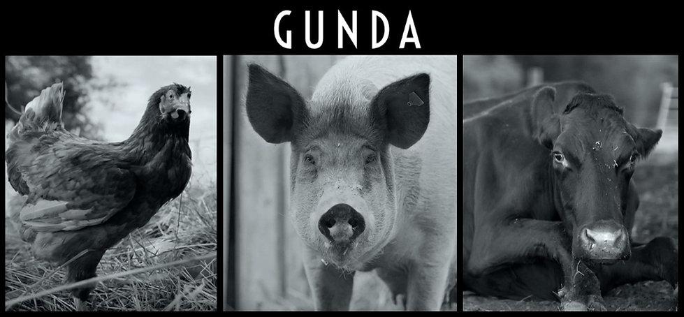 GUNDA vegan documentary