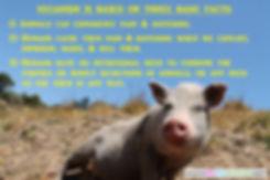 Veganism Facts
