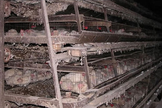 4 Battery Cages.jpg