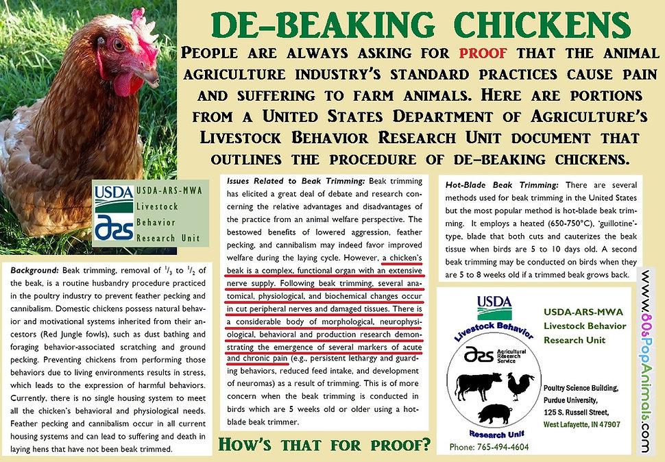 De-Beaking Chickens