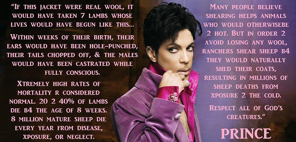 Prince Vegan Wool