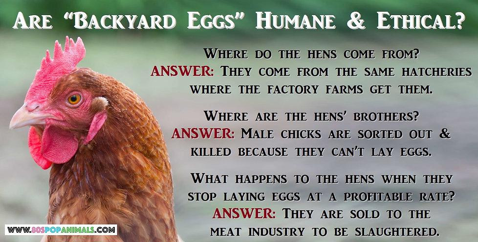 Backyard Eggs