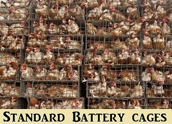 Standard Battery Cages.jpg