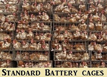 Standard Battery Cages.jpg