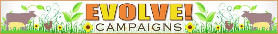 Evolve Campaigns.jpg