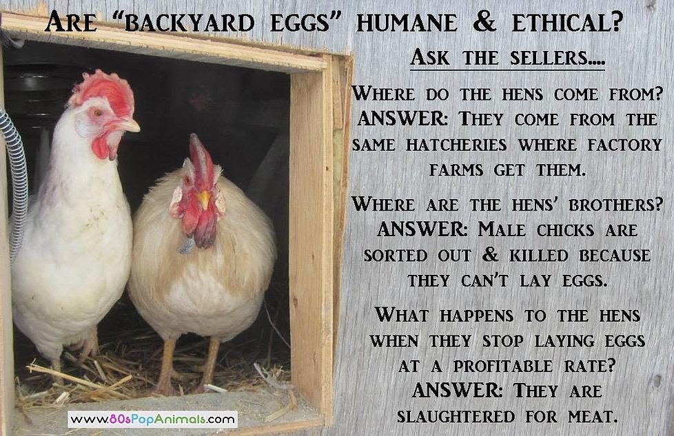 Bacyard Eggs