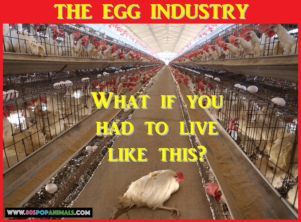 Eggs Egg Industry