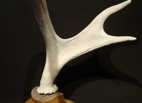 Jewelry holder - white ▸ made of deer antlers