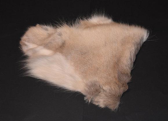 Section of Reindeer Skin 39/Abschnitt von Rentierfell 39