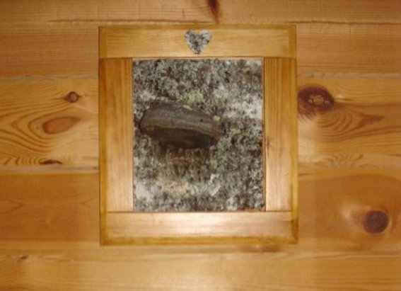 Birch bark with hump ▸ in pine frame