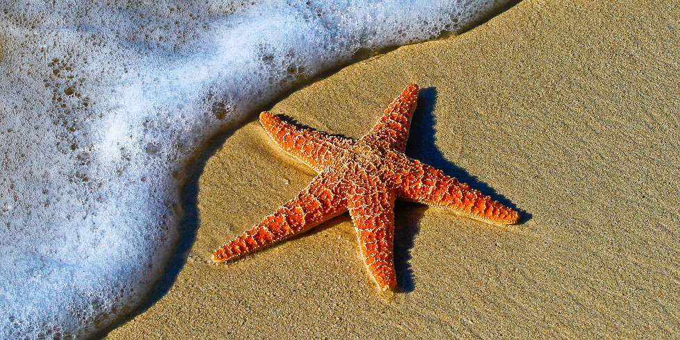 """Beach Blanket Bingo"" Movie Night"