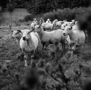 farm (27 van 67).JPG