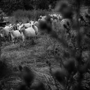 farm (25 van 67).JPG