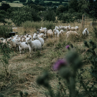 farm (26 van 67).JPG