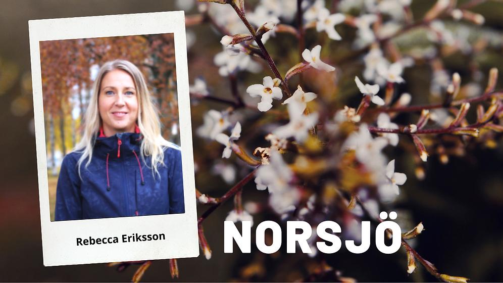 Norsjö (1).png