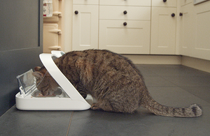 A tabby cat eats from a pet feeder in a kitchen