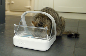 A tabby cat eating from a pet feeder.