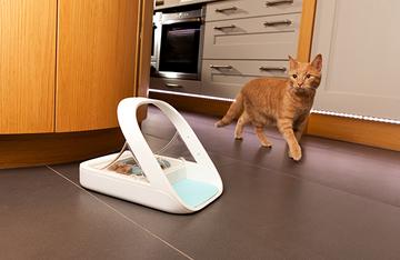 An orange cat walking into the kitchen, toward a pet-feeder.