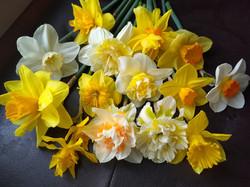 Single Variety CSA Bouquet