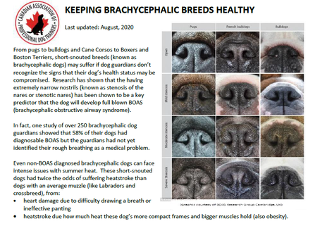 Keeping Brachycephalic Breeds Healthy - A Note from the CAPDT