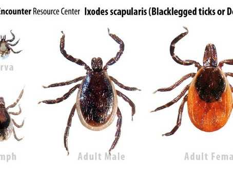 Everything You Need to Know About Ticks