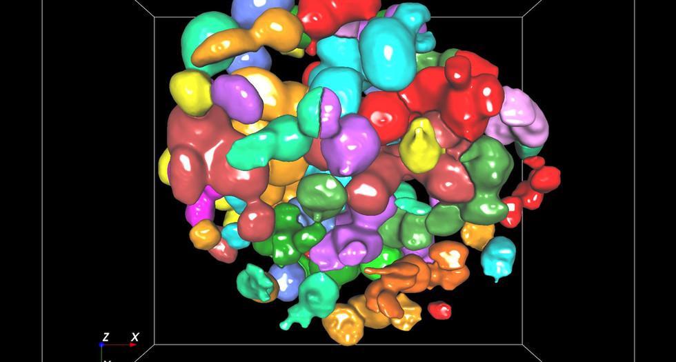 Nuclei segmentation - Aivia that learns