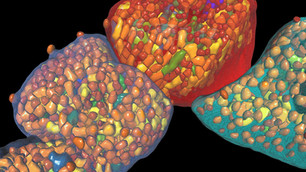 3D Cell Analysis Workshop