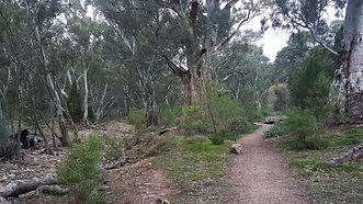 mambray creek.jpg