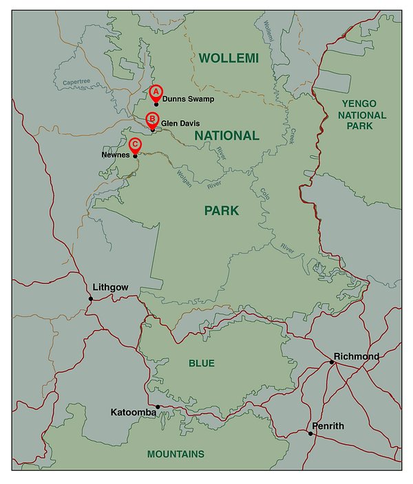wollemi np.png