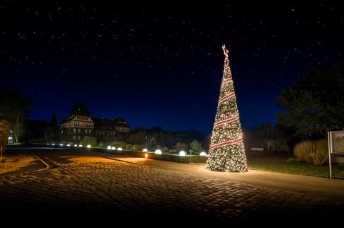 [2017-12-18] - Christmas Garden - 001.jpg